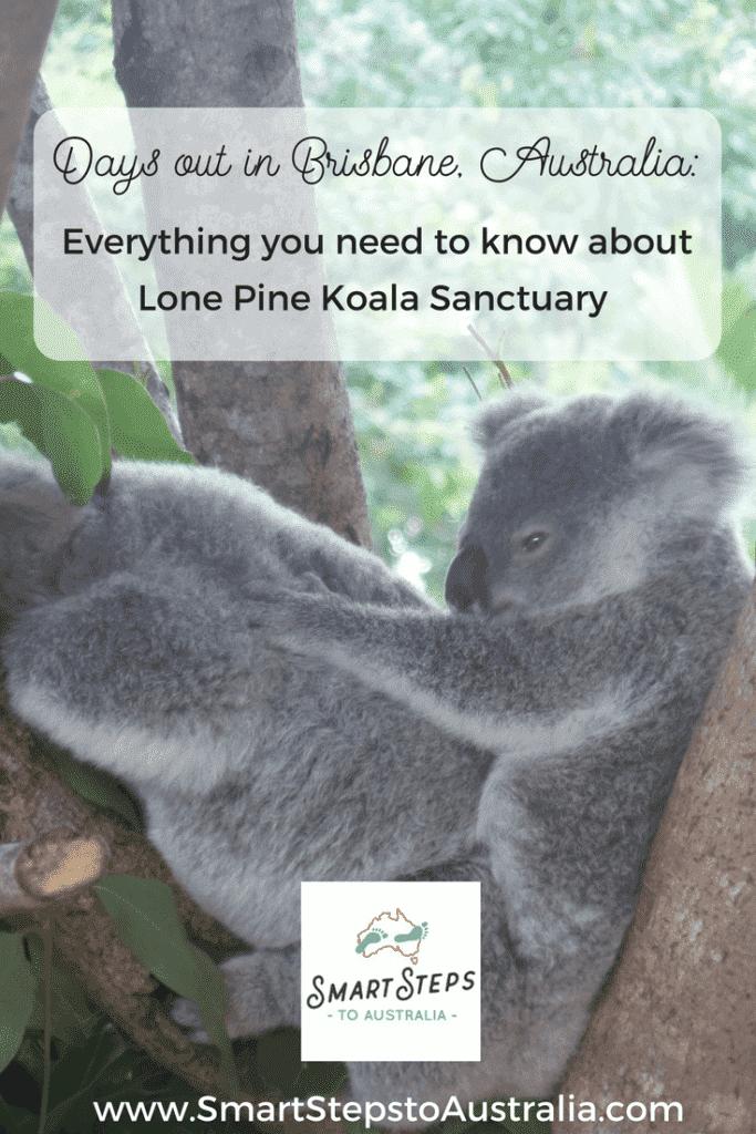 Pinterest image of a koala to promote Lone Pine Koala Sanctuary in Brisbane