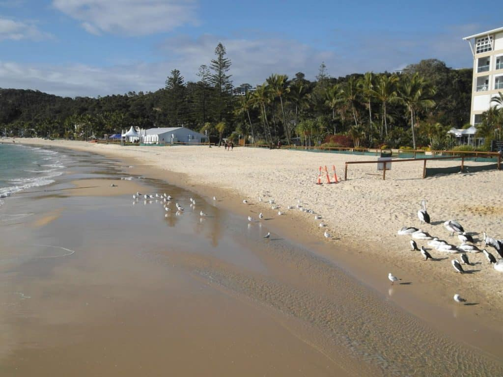 The beach and birdlife at Tangalooma Island