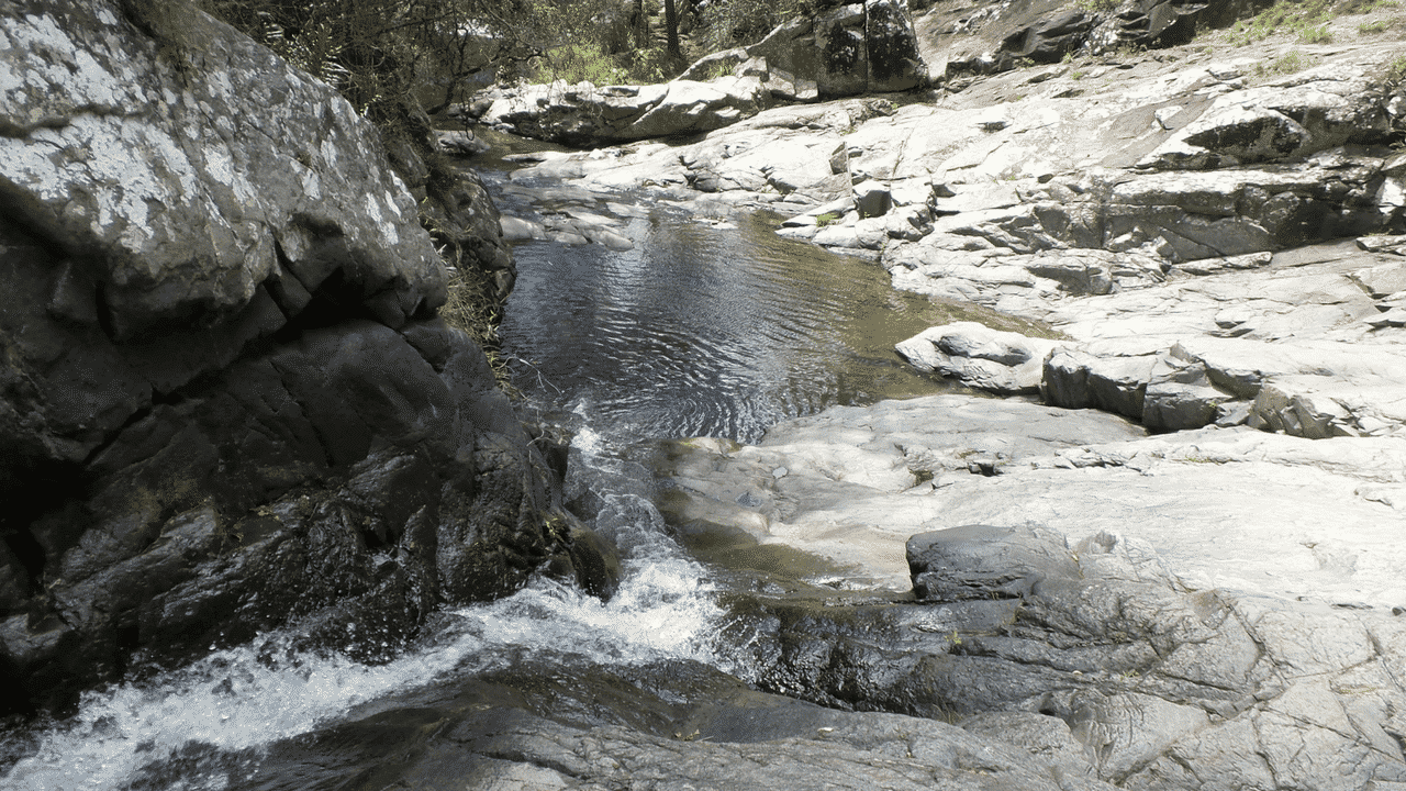 What to do in Tamborine Mountain with and without kids