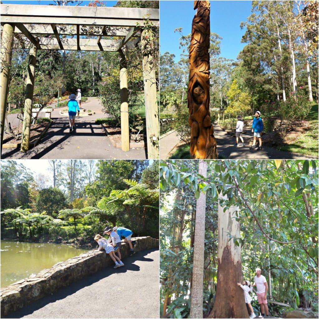 Collage of images from Tamborine Mountain Botanic Gardens