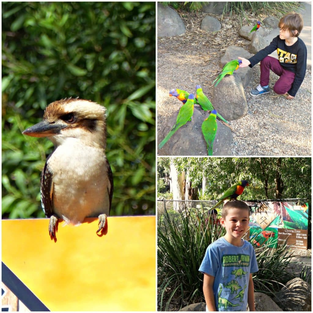 Collage of images of the bird feeding at Thunderbird Park Tamborine Mountain