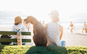 Lady and dog on a beach in Australia - emigrate in six easy steps