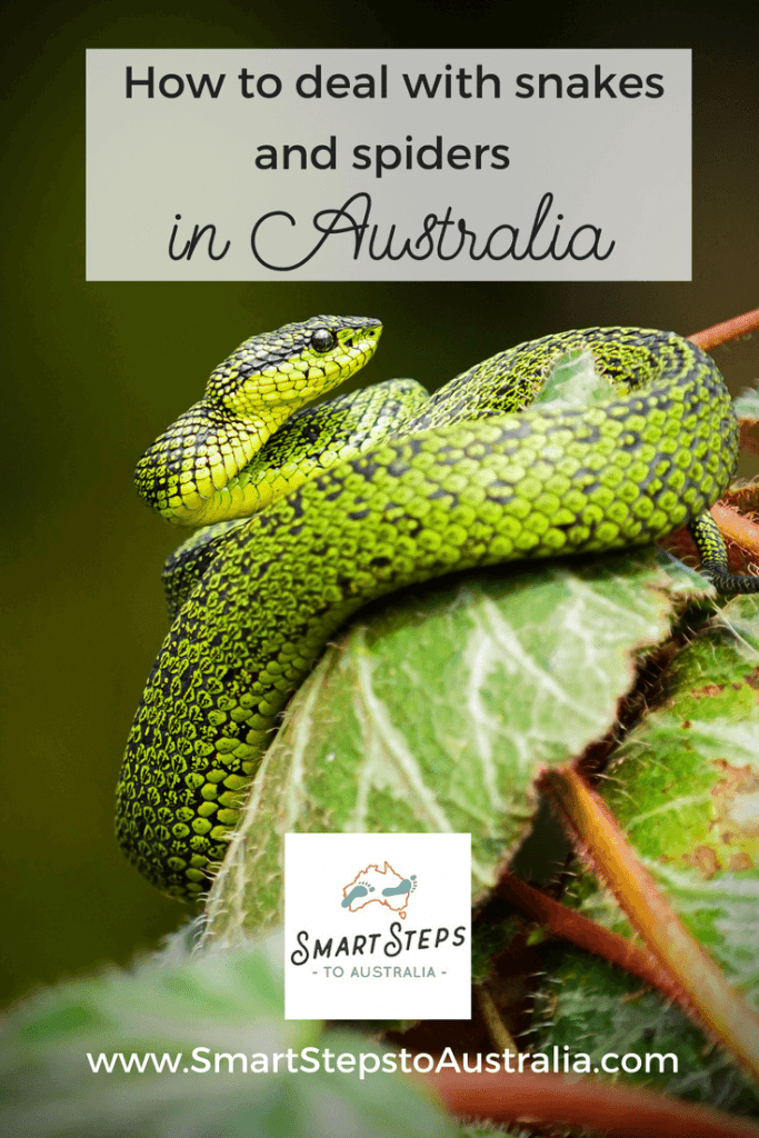Pinterest image - surviving the dangerous wildlife in Australia