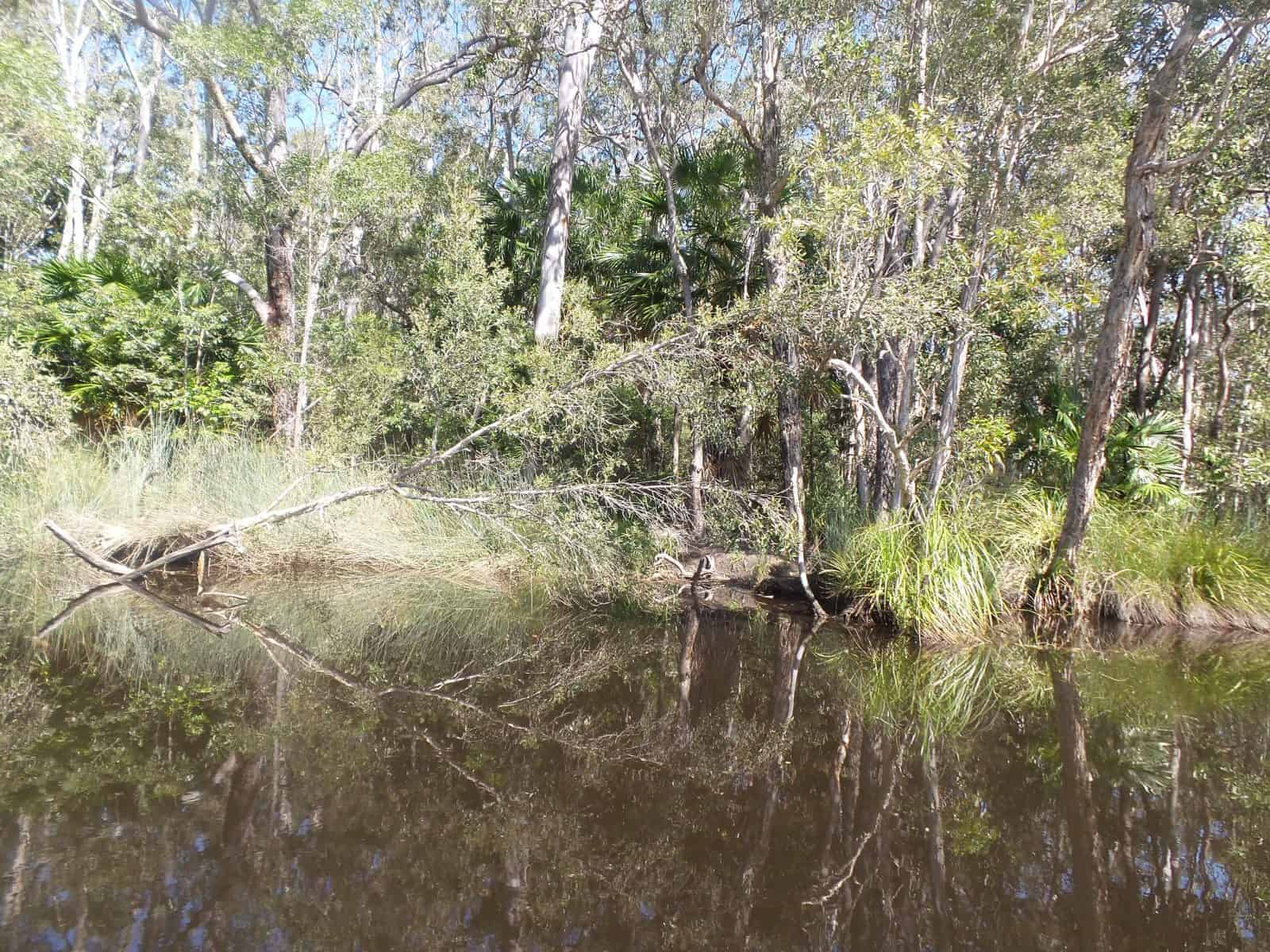 A picture of Noosa Everglades - things to do in Noosa