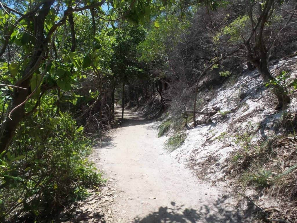 The path at Noosa National Park to the Noosa Fairy Pools