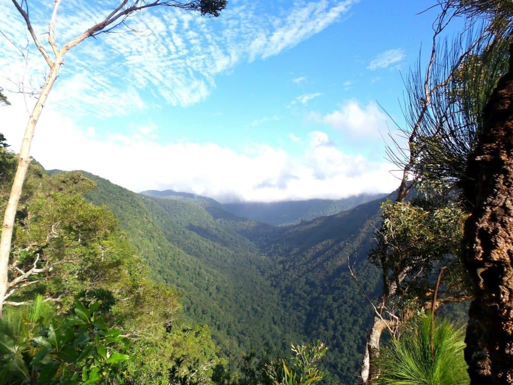Image of the rainforest at Lamington National Park from O'Reilly's Rainforest Retreat in the Gold Coast hinterland
