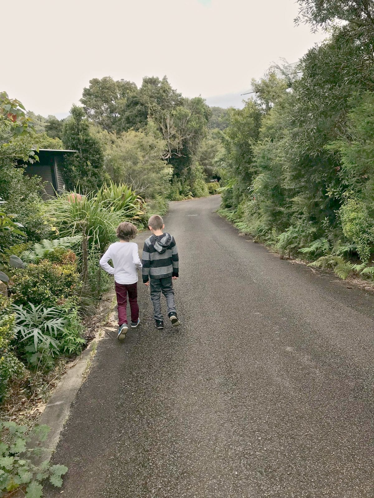 Two boys walking on a road at O'Reilly's Rainforest Retreat