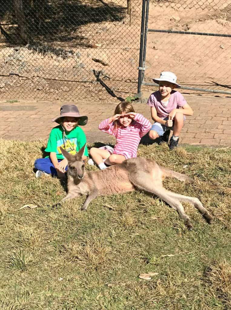 Three kids feeding a kangaroo at Currumbin Wildlife Sanctuary