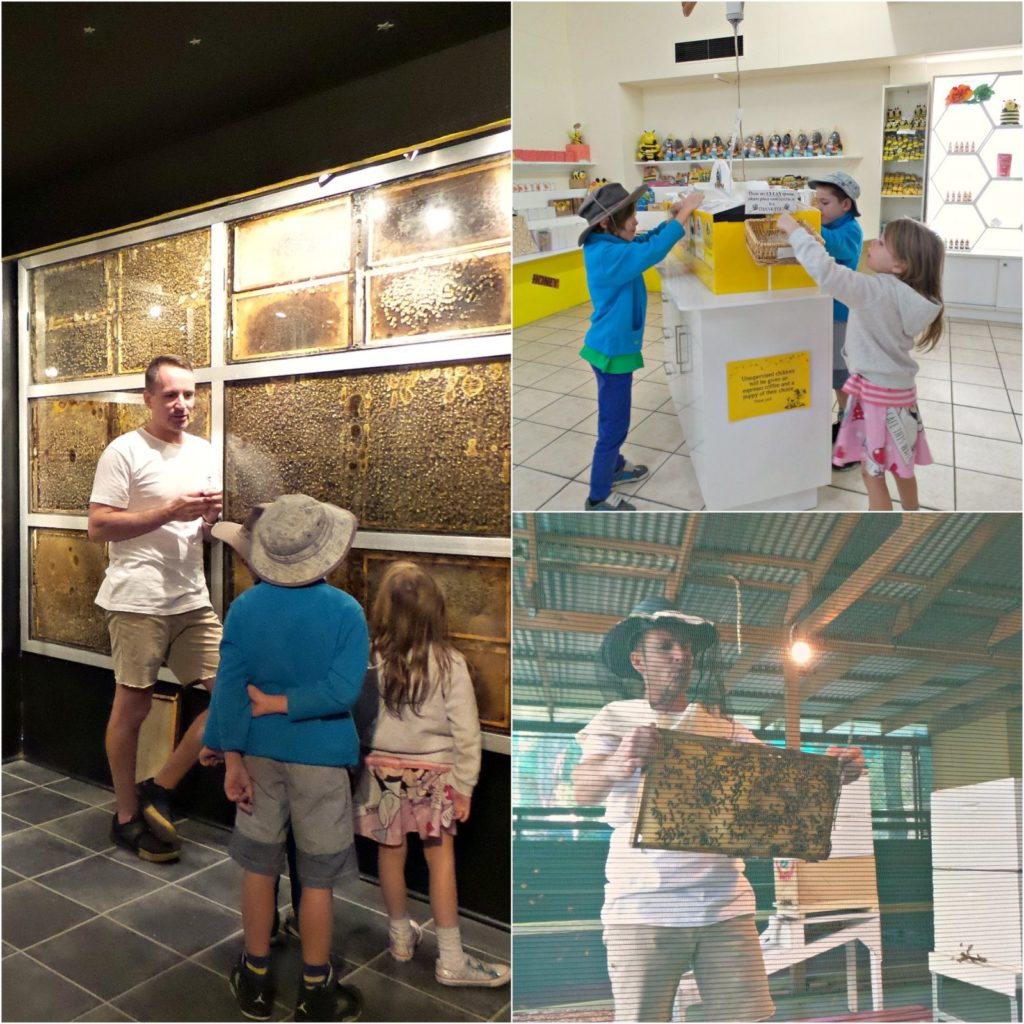 Collage of photos of kids at Superbee Honeyworld, Gold Coast on the bee tour