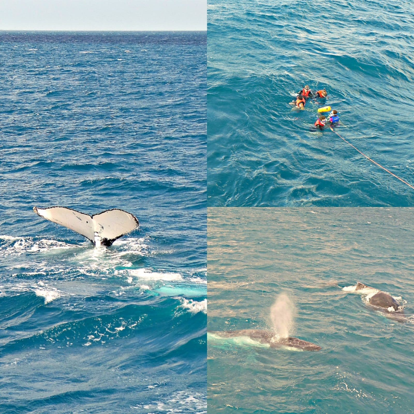 collage of whale watching cruise Australia tour pictures