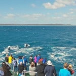 Everything you need to know about taking a whale watching cruise in Australia