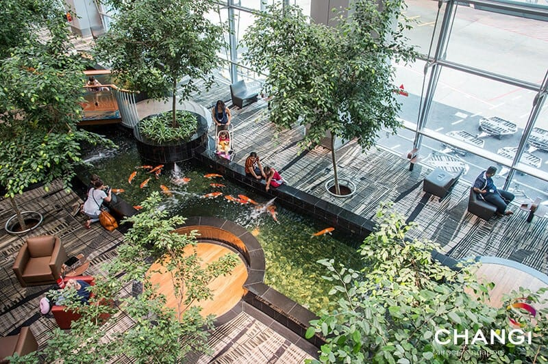Changi Airport koi pond