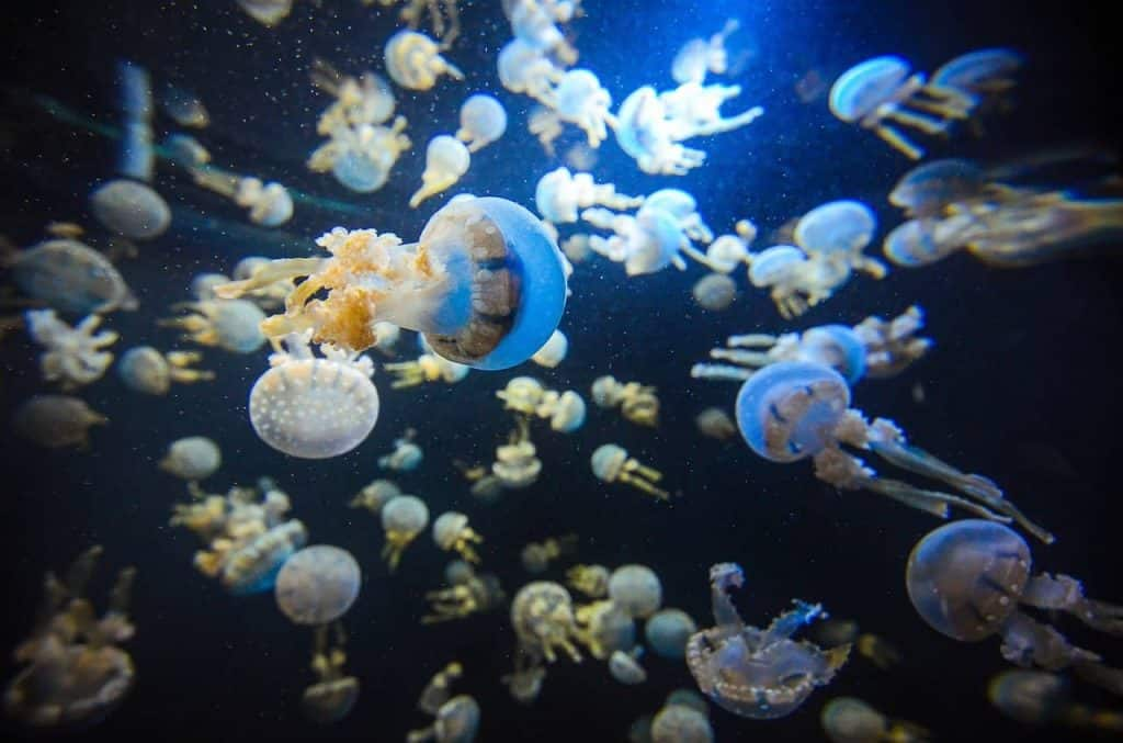 Jellyfish at the SEA Aquarium Singapore