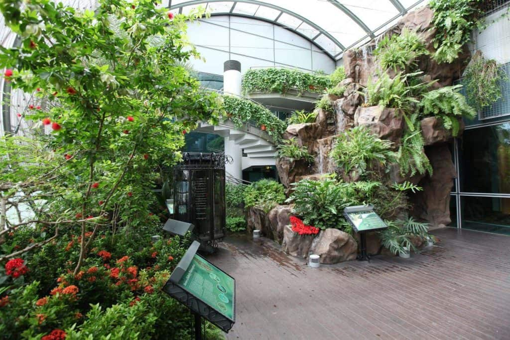 tropical gardens at Changie airport