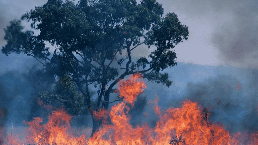 A bushfire in Australia