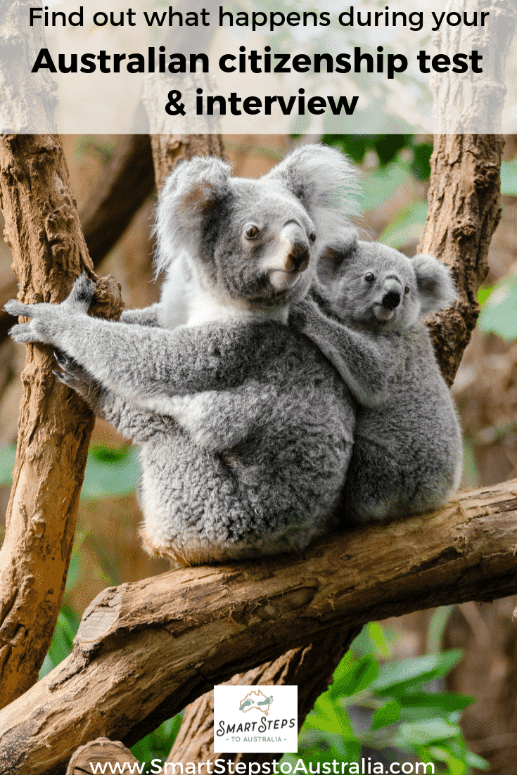 Pinterest image with koalas to promote post about how to find out what is involved in the Australian citizenship test and interview