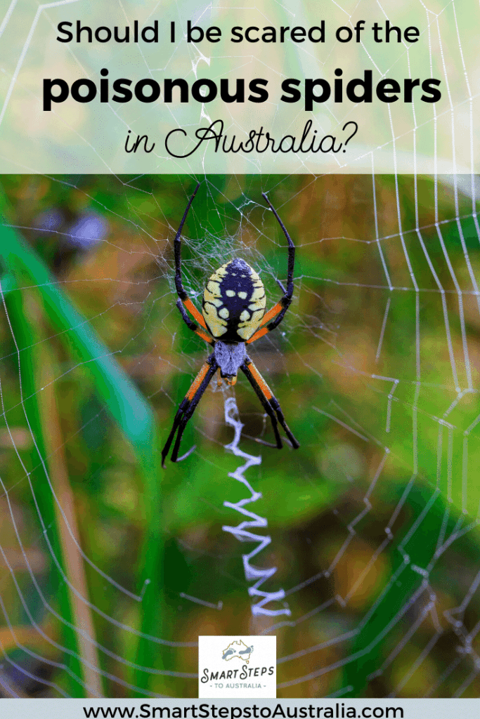 Pinterest image of a spider with text should I be scared of poisonous spiders in Australia