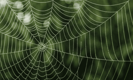 Should I be scared of living with poisonous spiders in Australia?