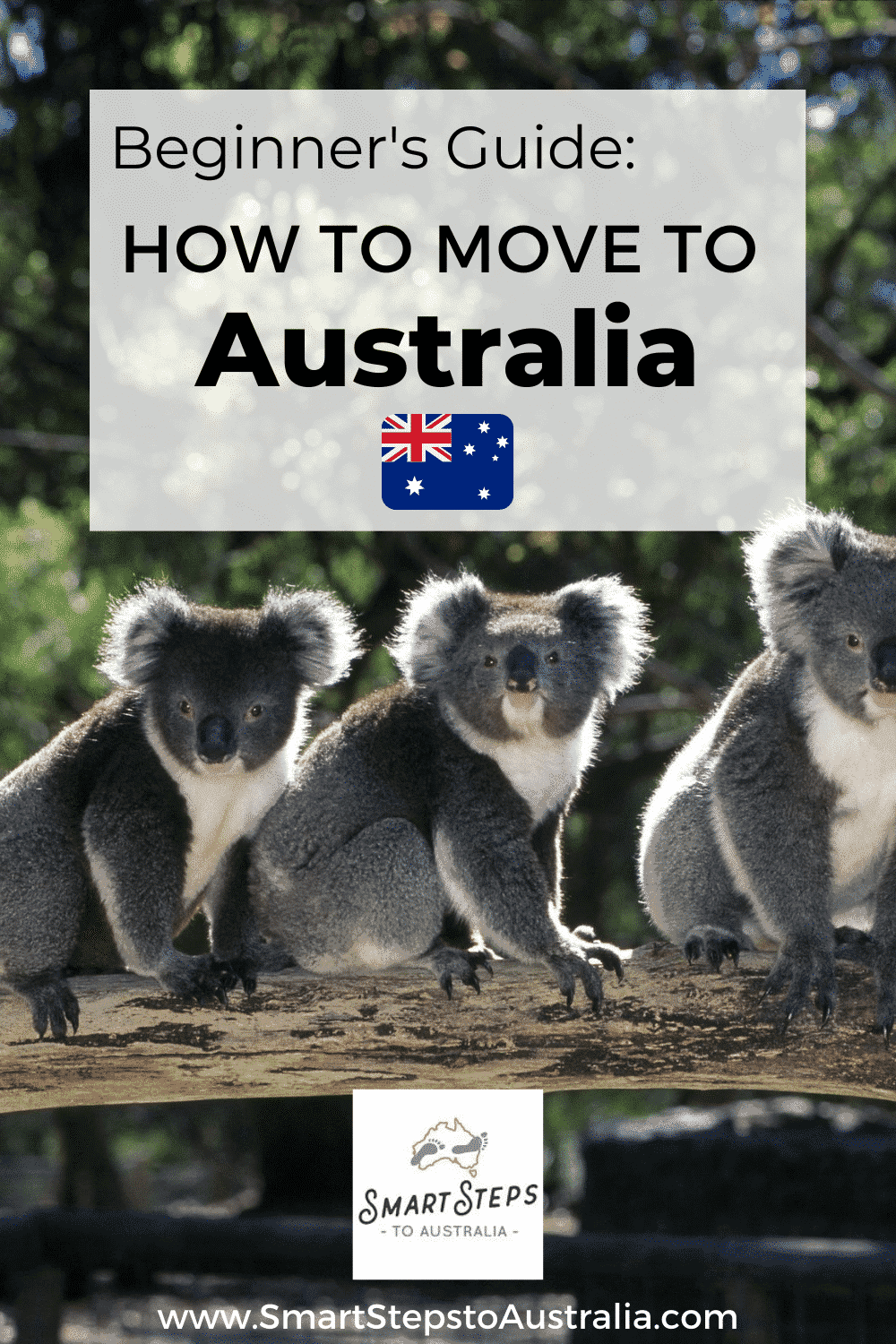 Pinterest image for a Beginner's Guide: How to move to Australia with koalas on it